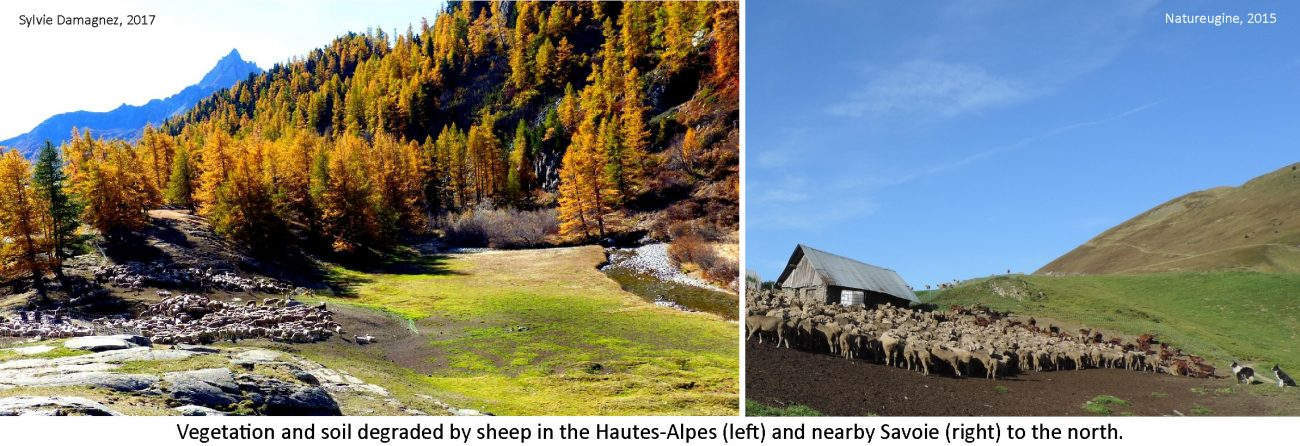 ventdouxprod 2018 nicolas barbier cars sheep large landowners winning trio hautes-alpes before hangover over sheep soil erosion land degradation