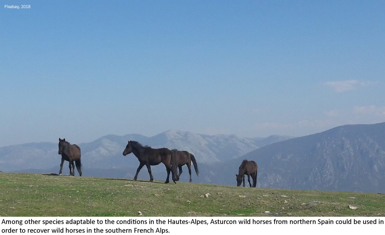 ventdouxprod 2018 nicolas barbier unwelcome wild migrants wild horses hautes-alpes french alps illegal reintroduction